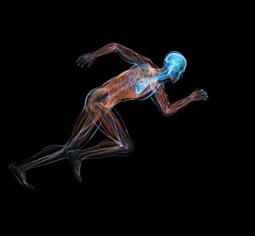 connessioni_cervello_corpo_salute_esercizio_fisico_500px.jpg