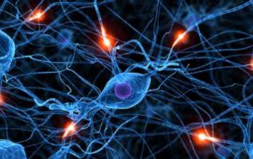 sinapsi_500px.jpg