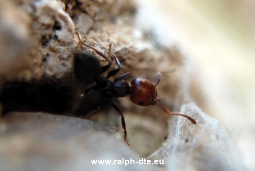 Comunicare con le formiche